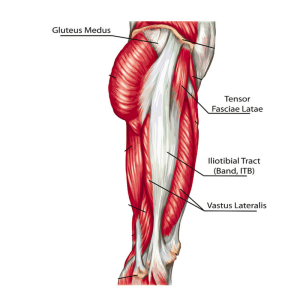 Lateral-Hip-Anatomy